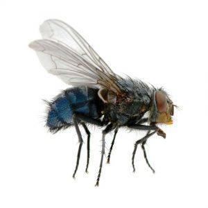 טיפול בזבובים