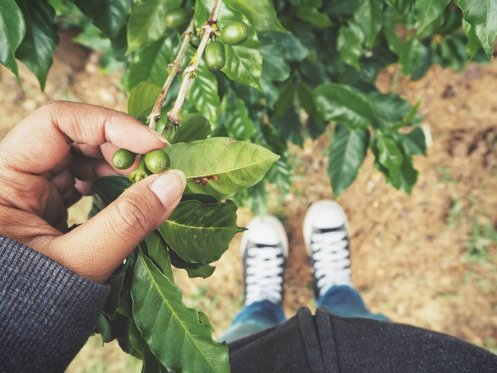 Selfie of coffee plant with shoes